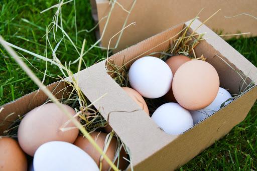 jajka kobiałka